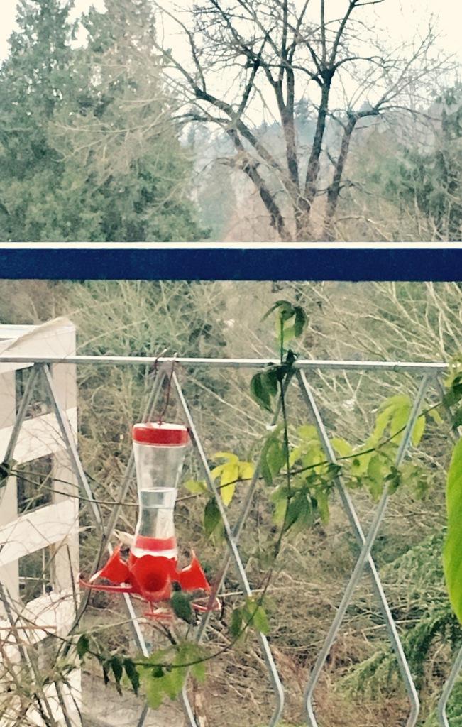 hummingbird2016