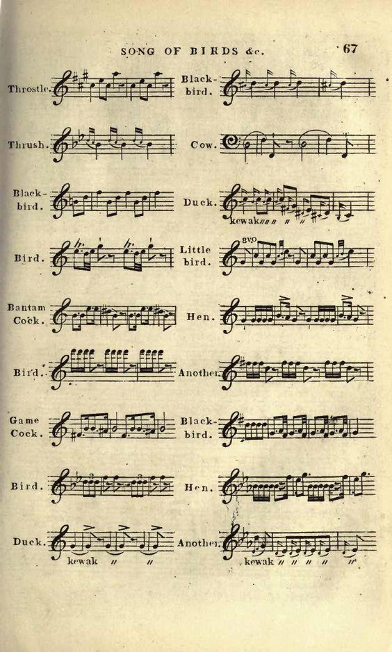 bird songs as musical notation.jpg